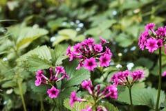 Flores hermosas en el jard?n fotos de archivo