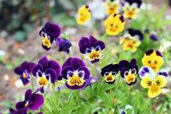 Flores hermosas en el jard?n imagen de archivo