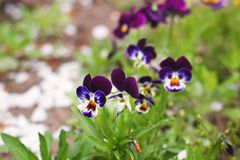 Flores hermosas en el jard?n fotografía de archivo libre de regalías