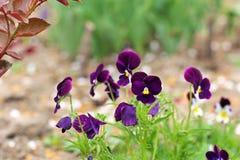 Flores hermosas en el jard?n imagenes de archivo