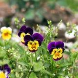 Flores hermosas en el jard?n fotografía de archivo