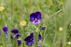 Flores hermosas en el jard?n fotos de archivo libres de regalías