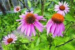 Flores hermosas en el jard?n Fondo de una variedad de jard?n imagen de archivo