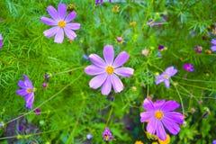 Flores hermosas en el jard?n Fondo de una variedad de jard?n fotografía de archivo libre de regalías