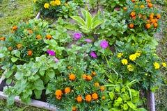 Flores hermosas en el jard?n Fondo de una variedad de jardín foto de archivo libre de regalías