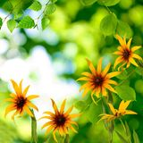 Flores hermosas en el parque imagen de archivo