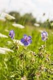 Flores hermosas en el prado Fotografía de archivo