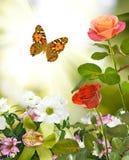 Flores hermosas en el primer del jardín Imagen de archivo