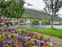 Flores hermosas en Islandia Imagen de archivo libre de regalías