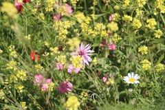 Flores hermosas en Israel Mount Gilboa Carmel Fotografía de archivo