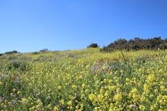 Flores hermosas en Israel Mount Gilboa Carmel Fotos de archivo libres de regalías