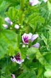 Flores hermosas en jardín Foto de archivo libre de regalías