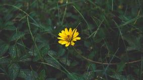 Flores hermosas en jardín Foto de archivo