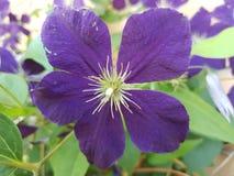 Flores hermosas en la estación de verano en casa, jardines y parques fotografía de archivo libre de regalías