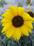 Flores hermosas en la estación de verano en casa, jardines y parques fotos de archivo libres de regalías