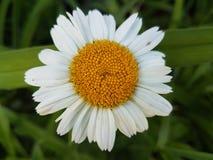 Flores hermosas en la estación de verano en casa, jardines y parques fotografía de archivo