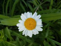 Flores hermosas en la estación de verano en casa, jardines y parques foto de archivo libre de regalías