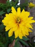Flores hermosas en la estación de verano en casa, jardines y parques imagen de archivo