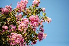 Flores hermosas en la luz del sol, el fondo Foto de archivo libre de regalías