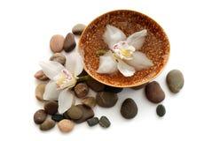 Flores hermosas en las piedras Fotografía de archivo