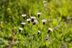 Flores hermosas en naturaleza imagen de archivo
