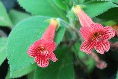 Flores hermosas en naturaleza imagenes de archivo