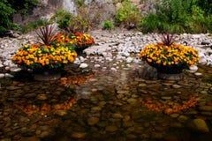 Flores hermosas en plantadores con reflexiones en el agua Fotos de archivo libres de regalías