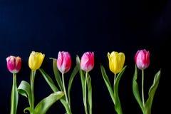 Flores hermosas en un fondo negro Foto de archivo libre de regalías