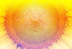 Flores hermosas hechas con los filtros de color Imágenes de archivo libres de regalías
