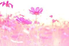 Flores hermosas hechas con los filtros de color Imagenes de archivo