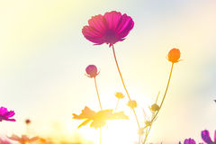 Flores hermosas hechas con los filtros de color Fotografía de archivo libre de regalías
