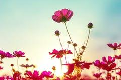 Flores hermosas hechas con los filtros de color Imagen de archivo