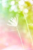 Flores hermosas hechas con los filtros de color, foco suave Imágenes de archivo libres de regalías