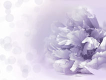 Flores hermosas hechas con los filtros de color - fondo de Abstrack Fotos de archivo