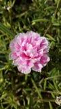 Flores hermosas la mañana fotos de archivo libres de regalías