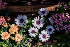 Flores hermosas que esperan té de tarde ilustración del vector