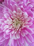 Flores hermosas que florecen bajo Sun, diversos tipos de la primavera de flores foto de archivo
