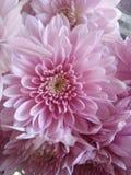 Flores hermosas que florecen bajo Sun, diversos tipos de la primavera de flores imagen de archivo libre de regalías