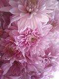 Flores hermosas que florecen bajo Sun, diversos tipos de la primavera de flores foto de archivo libre de regalías