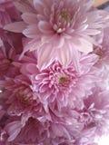 Flores hermosas que florecen bajo Sun, diversos tipos de la primavera de flores fotografía de archivo libre de regalías