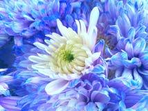Flores hermosas que florecen bajo Sun, diversos tipos de la primavera de flores fotografía de archivo
