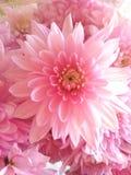 Flores hermosas que florecen bajo Sun, diversos tipos de la primavera de flores imagenes de archivo