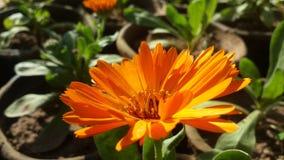 Flores hermosas rojas Imagen de archivo
