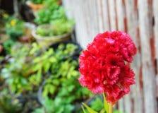 Flores hermosas rojas entre las flores fotos de archivo libres de regalías