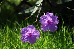 Flores hermosas y delicadas Foto de archivo