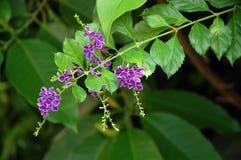 Flores hermosas y delicadas en el jardín Foto de archivo