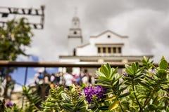 Flores hermosas y el monasterio de Monserrate Foto de archivo libre de regalías