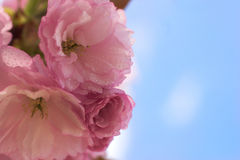 Flores hermosos Imagenes de archivo