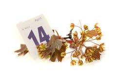 Flores hermosos del arce con la hoja del calendario Imágenes de archivo libres de regalías