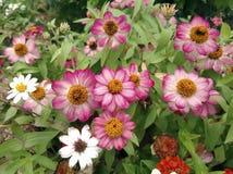 Flores heterogêneos Fotos de Stock Royalty Free